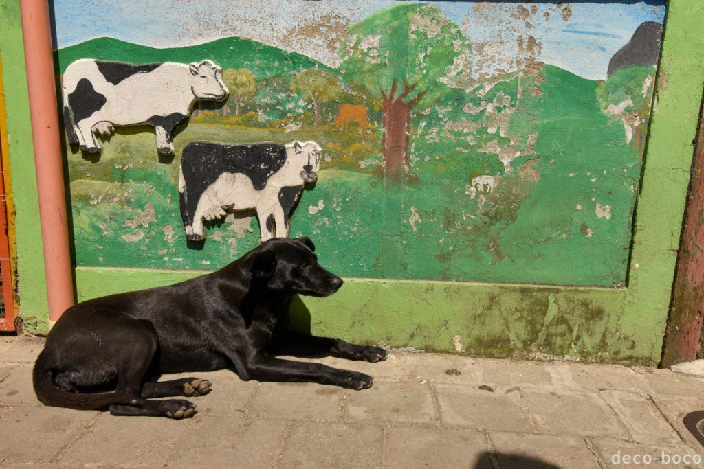 ゆるい牛と犬