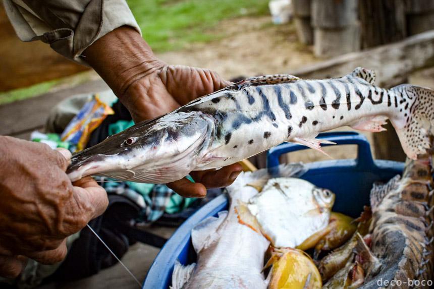 イキトス 魚