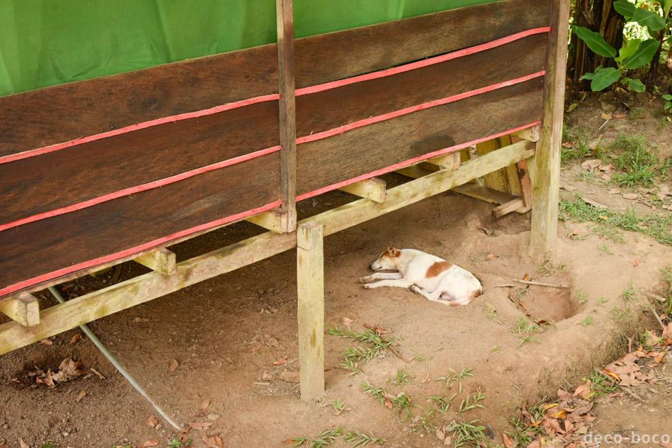 ロッジの軒下で寝る犬