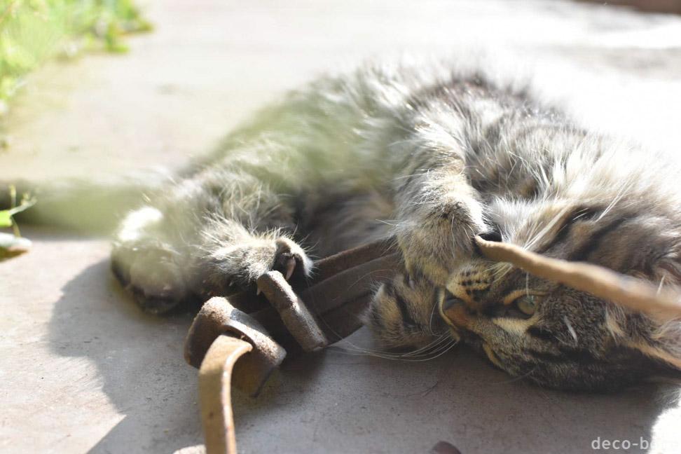 クスコ 宿の猫 Inka Hallpa