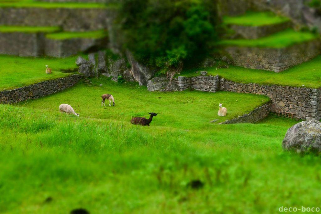ジオラマ風 マチュピチュ遺跡